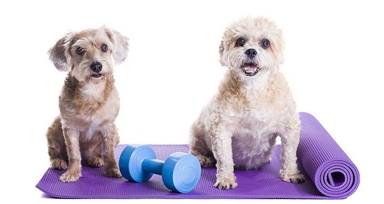 Exercises & Sports To Do With Your Dog